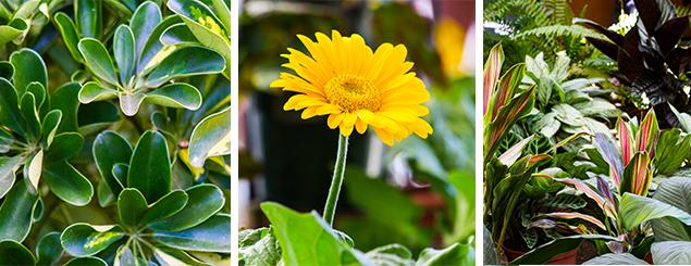 Plantas de flores para interiores interior del for Vivero mi planta