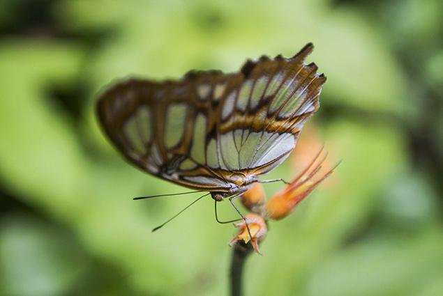 mariposa otra