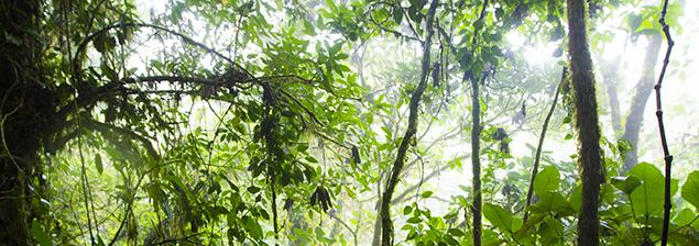 Monteverde ¡Un paseo por las nubes!