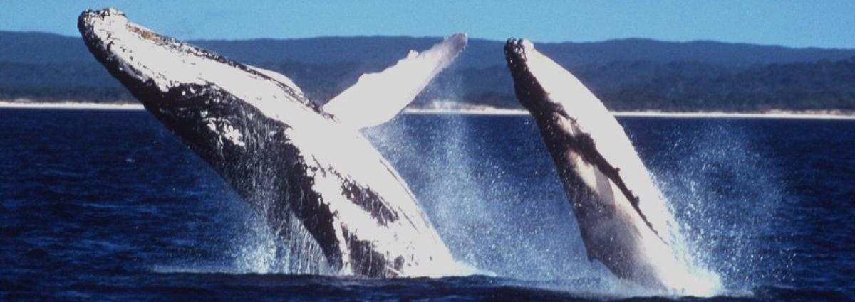Avistamiento de ballenas ¡de lujo!