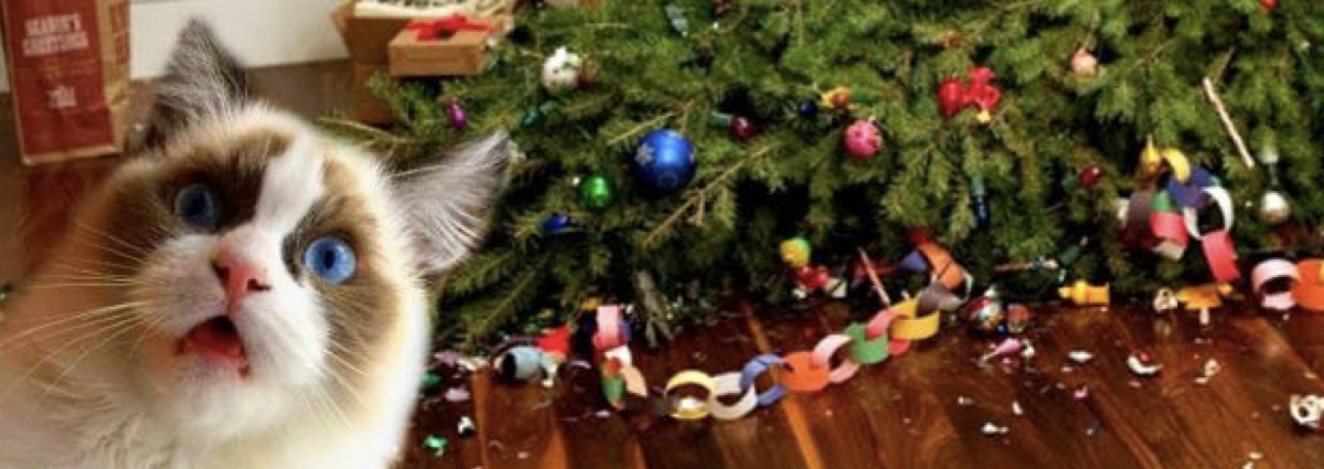 ¿Cómo hago para evitar que mis gatos no destruyan la decoración navideña?